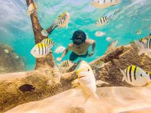 Young men snorkeling exploring underwater coral reef landscape background in the deep blue ocean with colorful fish and. Marine life stock photo