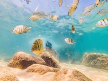 Young men snorkeling exploring underwater coral reef landscape background in the deep blue ocean with colorful fish and. Marine life royalty free stock image