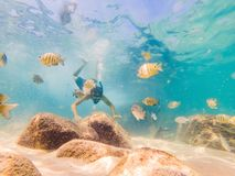 Young men snorkeling exploring underwater coral reef landscape background in the deep blue ocean with colorful fish and. Marine life stock image