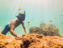 Young men snorkeling exploring underwater coral reef landscape background in the deep blue ocean with colorful fish and. Young man snorkeling exploring stock photo