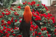 Young miraculous gothic girl with in black dress on dark background. Redhead pale model on background of roses bush. stock image