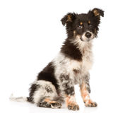 Young mixed breed dog looking at camera. isolated Royalty Free Stock Image