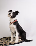 Young mixedbreed dog Stock Images