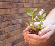 Young money tree in hands with money leaf Stock Image