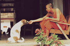 a young monk feeding a stray dog Royalty Free Stock Images