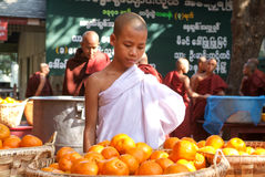 Young monk in the kitchen in front of a pile of oranges at Mahag Stock Photo