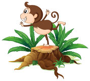 A young monkey playing above the stump Royalty Free Stock Images
