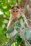 Young monkey in deep thoughts stock image