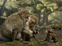 Young monkeys meet Stock Photos