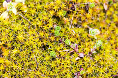 Young Moss in Spring Royalty Free Stock Photos