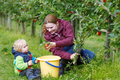 Young mother and adorable little toddler boy picking organic app Royalty Free Stock Photography