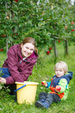 Young mother and adorable little toddler boy picking organic app Royalty Free Stock Images