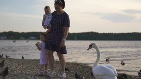 Young mother with her baby girl daughters feeding swan and little ducklings birds bread at a river wearing dotted dress stock video footage