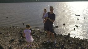 Young mother with her baby girl daughters feeding swan and little ducklings birds bread at a river wearing dotted dress. Young mother with her baby girl stock video footage