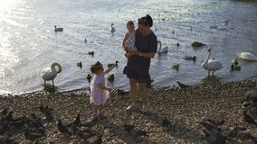 Young mother with her baby girl daughters feeding swan and little ducklings birds bread at a river wearing dotted dress. Young mother with her baby girl stock video