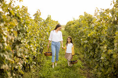 Young mother and her cute girl have fun in autumn vineyard royalty free stock image