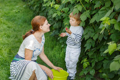 Young mother and her little son picking raspberries on farm in G Stock Images