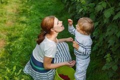 Young mother and her little son picking raspberries on farm in G Stock Photo