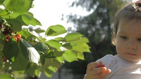 Young mother holding a baby girl on hands while baby eating cherries straight from the tree stock video footage