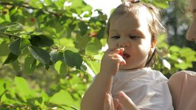 Young mother holding a baby girl on hands while baby eating cherries straight from the tree stock footage