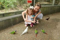 Young mother and little daughter enjoying with parrots outside in Thailand. royalty free stock image