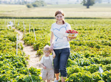 Young mother and little son on organic strawberry farm in summe Royalty Free Stock Photos