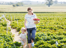 Young mother and little son on organic strawberry farm in summer Stock Photo