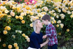 A young mother with little son sitting near yellow roses bush, hugging and laughing stock image
