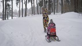Young mother runs on a snowy pine park, holding  rope from the sled,  which her small child is sitting. She looks ba stock video footage