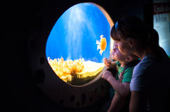Young mother and son looking at the jellies Royalty Free Stock Photo