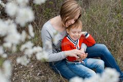A young mother and son with smiles, play each other`s hands in t. He blossoms of cherry blossoms, warmly embrace each other. Dressed in jeans and bright trendy royalty free stock photography