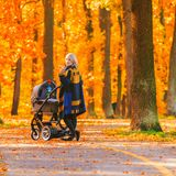 A young mother with a stroller walks through the autumn park back to the camera. Walking with an infant in the open air in a pine forest. Newborn, family Stock Image