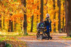 A young mother with a stroller walks through the autumn park back to the camera. Walking with an infant in the open air in a pine forest. Newborn, family Stock Photography