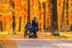 A young mother with a stroller walks through the autumn park back to the camera. Walking with an infant in the open air in a pine forest. Newborn, family Royalty Free Stock Photos