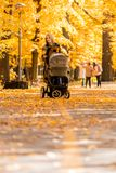 A young mother with a stroller walks through the autumn park. Walking with an infant in the open air in a pine forest. Newborn, family, child, parenthood Stock Photos