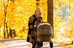 A young mother with a stroller walks through the autumn park. Walking with an infant in the open air in a pine forest. Newborn, family, child, parenthood Stock Image