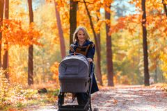 A young mother with a stroller walks through the autumn park Royalty Free Stock Photos