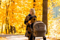 A young mother with a stroller walks through the autumn park. Walking with an infant in the open air in a pine forest. Newborn, family, child, parenthood Stock Photography