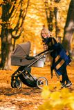A young mother with a stroller walks through the autumn park. Walking with an infant in the open air in a pine forest. Newborn, family, child, parenthood Stock Images