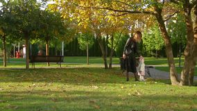 Mother walks with his lovely cute infant daughter on autumn lawn in pictorial city park with trees and fallen yellow leaves. Young mother walks with his lovely stock footage