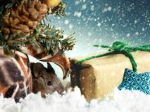 Young mouse hides under Christmas tree near gift`s box on background of snowing. Christmas card: young mouse hides under Christmas tree near gift`s box on stock photo