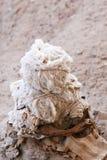 Young Mummy Stock Photos