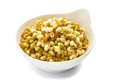 Young mung bean sprouts Stock Images