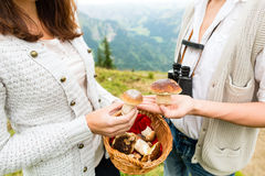 Young mushroom pickers in the Bavarian alps Stock Images