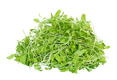 Young Mustard Green Royalty Free Stock Photography