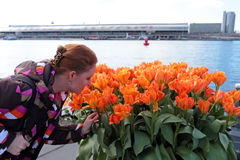 Young native dutch woman smelling blossoming tulips in Amsterdam Netherlands. Young native dutch woman smelling blossoming tulips in the harbor from Amsterdam Royalty Free Stock Images