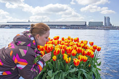 Young native dutch woman smelling blossoming tulips in the harbo. R from Amsterdam Stock Images