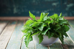 Young nettle leaves in pot on rustic background, stinging nettles, urtica royalty free stock photos