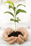 A young new plant growing in hands Stock Images