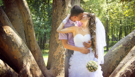Young newlyweds kissing in the park. In the shadow of giant platan Royalty Free Stock Images